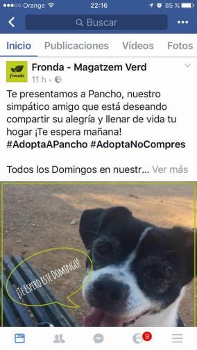 pancho3